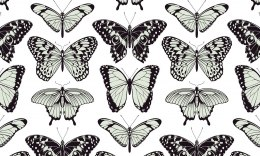 Eco tapeta scienna BUTTERFLY